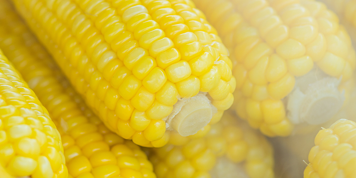 Why Corn Is So Hard to Digest