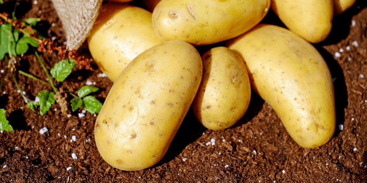 do potatoes cause gas